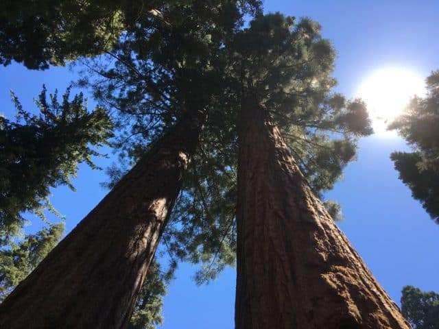 The Beauty of Big Trees: Sequoia and Kings Canyon National Parks